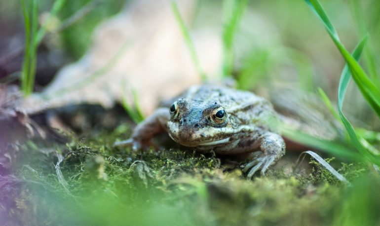 This image has an empty alt attribute; its file name is toad-for-the-toad-abode-3-770x458.jpg